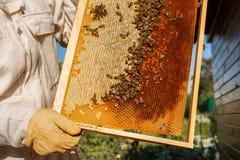Las manos del primer del apicultor llevan a cabo el marco de madera con el panal Recoja la miel Concepto de la apicultura imagen de archivo libre de regalías