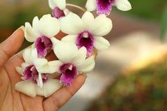 Las manos están sosteniendo un manojo de orquídeas blancas Imagen de archivo