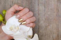 Las manos femeninas con el clavo del oro diseñan sostener la orquídea blanca fotografía de archivo