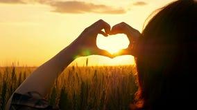 Las manos femeninas muestran el corazón en el sol en la puesta del sol en un campo del trigo Los rayos del sol pasan a través del metrajes