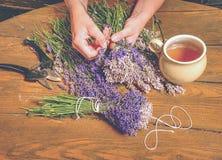 Las manos femeninas preparan la lavanda del tallo para los flores asombrosos del manojo de los olores Fotografía de archivo libre de regalías