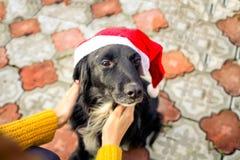Las manos femeninas puestas en Santa Claus son casquillo en un perro Expectativa del Año Nuevo Año de un perro Fotos de archivo libres de regalías