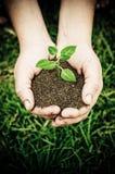 Las manos plantan I Fotografía de archivo libre de regalías