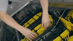 Las manos ponen un cable amarillo del cable de Ethernet en estante metrajes