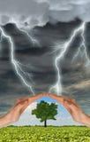 Las manos preservan un árbol verde contra tempestad de truenos imagen de archivo