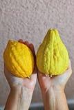 Las manos que sostienen la fruta cítrica ritual - etrog Imagen de archivo libre de regalías