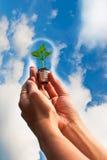 Las manos sostienen la planta verde en bombilla Imágenes de archivo libres de regalías