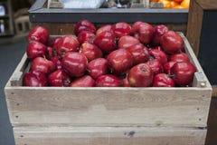 Las manzanas amarillas rojas acaban de escoger de una huerta, en un cajón plástico en la hierba fotos de archivo