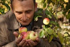 Las manzanas de mediana edad del asimiento del hombre en las manos y las huelen fotografía de archivo libre de regalías