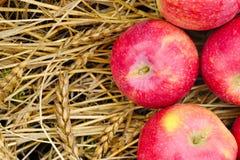 Las manzanas frescas de la cosecha maduraron los oídos Foto de archivo