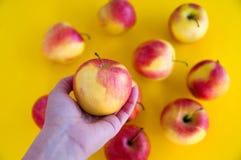 las manzanas frescas jugosas Amarillo-rojas mienten en un fondo amarillo fruta fresca del jard?n Sostenga una manzana en su mano  imagen de archivo libre de regalías