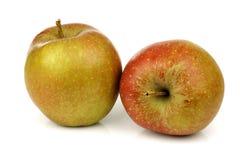 Las manzanas holandesas tradicionales llamaron el goudrenet foto de archivo