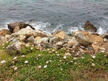 las Mar-roca-plantas coexisten juntas Imágenes de archivo libres de regalías