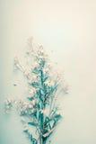 Las margaritas bastante salvajes florecen en fondo en colores pastel azul imagen de archivo libre de regalías