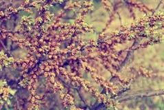 Las margaritas blancas en un fondo del prado del verano teñieron la violeta Imágenes de archivo libres de regalías