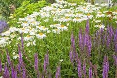 Jardín de la margarita Foto de archivo