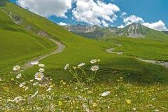 Las margaritas florecientes en un fondo de la montaña ajardinan Fotos de archivo libres de regalías