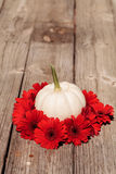 Las margaritas rojas del gerbera suenan una calabaza blanca tallada de Casper Fotografía de archivo