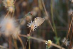 Las mariposas chupan las flores imagen de archivo