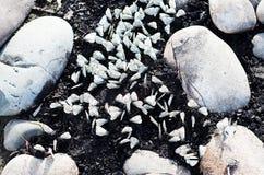 Las mariposas se sientan entre piedras en un fondo del río Imagen de archivo