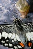 Las mariposas son los insectos que ayudan a polinizar las flores fotos de archivo