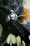 Las mariposas son los insectos que ayudan a polinizar las flores foto de archivo libre de regalías