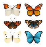Las mariposas vector el sistema Mariposa plana colorida Pendiente realista del color Fotos de archivo