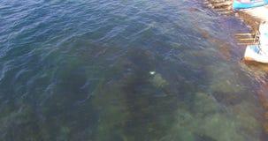 Las medusas del Mar Negro en las aguas frías del Burgas aúllan cerca de Pomorie en Bulgaria almacen de metraje de vídeo