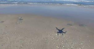 Las medusas en el otoño varan en Pomorie, Bulgaria almacen de metraje de vídeo