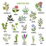 Las mejores hierbas antibacterianas ilustración del vector