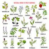 Las mejores hierbas medicinales para tratar diarrea stock de ilustración
