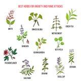 Las mejores hierbas naturales para los ataques de la ansiedad y de pánico stock de ilustración