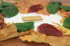 Las mejores hojas de otoño de árboles y aún de la vida fotos de archivo