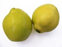 Las mejores imágenes de la fruta del membrillo para los diseños de la publicidad y del logotipo Fotografía de archivo