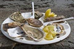 Las mejores ostras, la derecha en la orilla de mar Imagenes de archivo