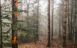 las mgła Obraz Stock