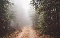las mgła Zdjęcie Stock