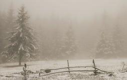 las mgła Obrazy Stock