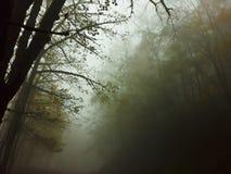 las mgła zdjęcia royalty free