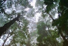 las mgła Obrazy Royalty Free