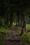 las mistyczne zdjęcia stock