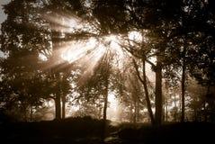 las mistyczny Zdjęcia Royalty Free