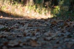 Las mlejący w jesieni obraz royalty free