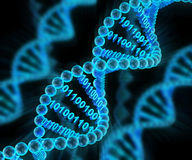 Las moléculas de la DNA con el código binario, 3d rinden Fotos de archivo libres de regalías
