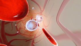 Las moléculas y los eritrocitos del oxígeno que flotan en la sangre fluyen fotos de archivo libres de regalías