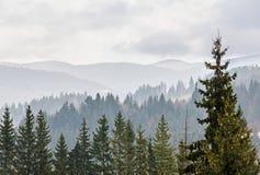 Las montañas cárpatas con el bosque de los pinos, árboles coloreados, cielo vibrante nublado, tiempo del otoño-invierno Predeal,  Foto de archivo libre de regalías