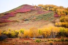Las montañas coloridas en los prados Imágenes de archivo libres de regalías
