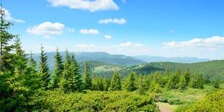 Las montañas cubrieron árboles Imagenes de archivo
