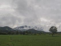 Las montañas, debajo de la niebla y del arroz Foto de archivo libre de regalías