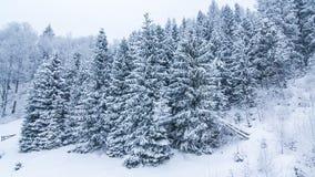 Las montañas del invierno ajardinan con las altas piceas y nieve almacen de video